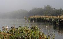 Stagno Acqua Wikipedia