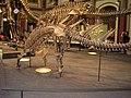 Kostra kentrosaura.jpg