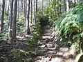 Kumano Kodo Dainichigoe World heritage45.JPG