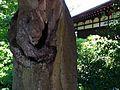 Kyoto 0521.jpg