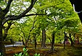 Kyoto Tofuku-ji Garten 1.jpg