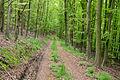 Lügde - 2015-05-12 - LSG-Pyrmonter Bergland sowie südliches Lipper Bergland (01).jpg