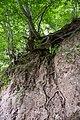 Lügde - 2015-05-29 - LIP-064 (20).jpg