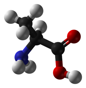 Molecule of alanine used in NMR implementation...