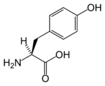 Chemical structure of Tyrosine