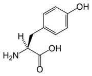 Skeletal formula of tyrosine