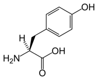 L-tyrosine-skeletal.png