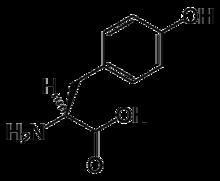 Amino acid l tyrosine