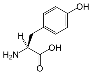 Tyrosine kinase - Image: L tyrosine skeletal