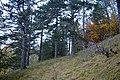 LSG Sudmerberg - Herbstwald (2).jpg