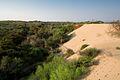 La duna costiera a Cava Randello.jpg