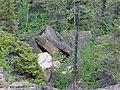 Landscape by Denare SK The Limestone Crevasses.jpg