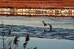 Langley winter wonderland 140130-F-IT851-212.jpg