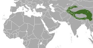 Large-eared pika - Image: Large eared Pika area