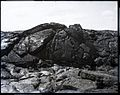 Lava Flow, Hawaii (16), photograph by Brother Bertram.jpg