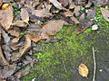 Leaves, twigs and moss.jpg