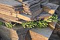 Les rochers de la baie de Cayola (Sables dOlonne) (7287647738).jpg