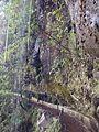 Levada Furado near Ribeiro Frio, Madeira (15788544543).jpg