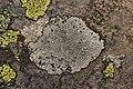 Lichen (44295666101).jpg