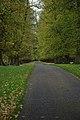 Lime Avenue, Calke Park - geograph.org.uk - 277878.jpg