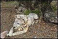 Lion Statue beside road way-1 (22107959158).jpg