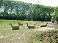 Llamas, Chester Zoo - geograph.org.uk - 11567.jpg