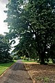 London - Kew Gardens - View SSW towards Princess of Wales Conservatory 1987.jpg