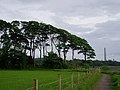 Lunderston Bay Path - geograph.org.uk - 28276.jpg