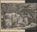 Lupus orientalis - 1700-1880 - Print - Iconographia Zoologica - Special Collections University of Amsterdam - UBA01 IZ22200363.tif
