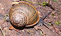 MK-snail005.jpg