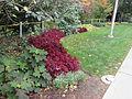 MSU 2014 Botanical Garden C.jpg