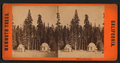 Mammoth Tree Grove, from Robert N. Dennis collection of stereoscopic views.png