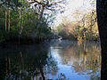 Manatee River SP - Spring Run.jpg