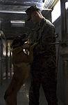 Marine Corps dog handlers rehearse explosive detection measures 150204-M-TA471-564.jpg