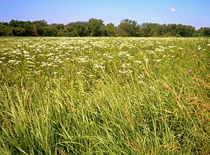 Gensburg-Markham Prairie - Image: Markham prairie 1
