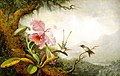 Martin Johnson Heade - Hummingbirds and Orchids (15130307632).jpg