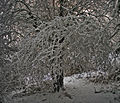 Merstham Winter Walk (6840004371).jpg