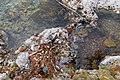 Microplastics in Mljet National Park in Croatia (48738883061).jpg
