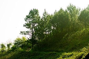Monte Ulia 1.jpg