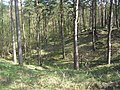 Moosheide-Trockental-2.jpg
