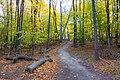 Mt. McSauba Trail.jpg