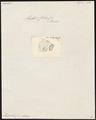 Mugil chelo - kop - 1700-1880 - Print - Iconographia Zoologica - Special Collections University of Amsterdam - UBA01 IZ13800059.tif