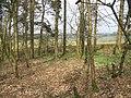 Muiravonside Wood - geograph.org.uk - 1233295.jpg