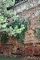 Mura di Piazza XXIV Luglio, Empoli (4).JPG