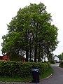 ND Lindengruppe am Friedhofsweg in Berndorf (Eifel).jpg