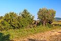 NPP Kamenná slunce 13.jpg