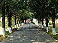 Nalanda - 001 Tree lined Entrance (9253856654).jpg