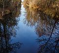 Nationaal Park Weerribben-Wieden. Spiegeling in het water 01.jpg