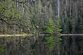 Nationalpark Schwarzwald Wildsee-10.jpg