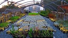 Vivero jardiner a wikipedia la enciclopedia libre for Factores para seleccionar el terreno para el vivero